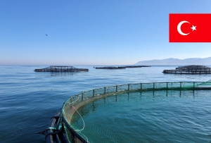Introduction with the Turkey's Fish Industry