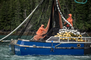 Run Forecasts and Harvest Projections for 2021 Alaska Salmon Fisheries and Review of the 2020 Season