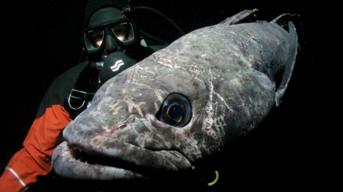 The longline fishery for toothfish started in the Antarctic