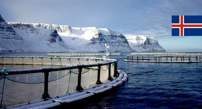 Iceland expects a salmon boom